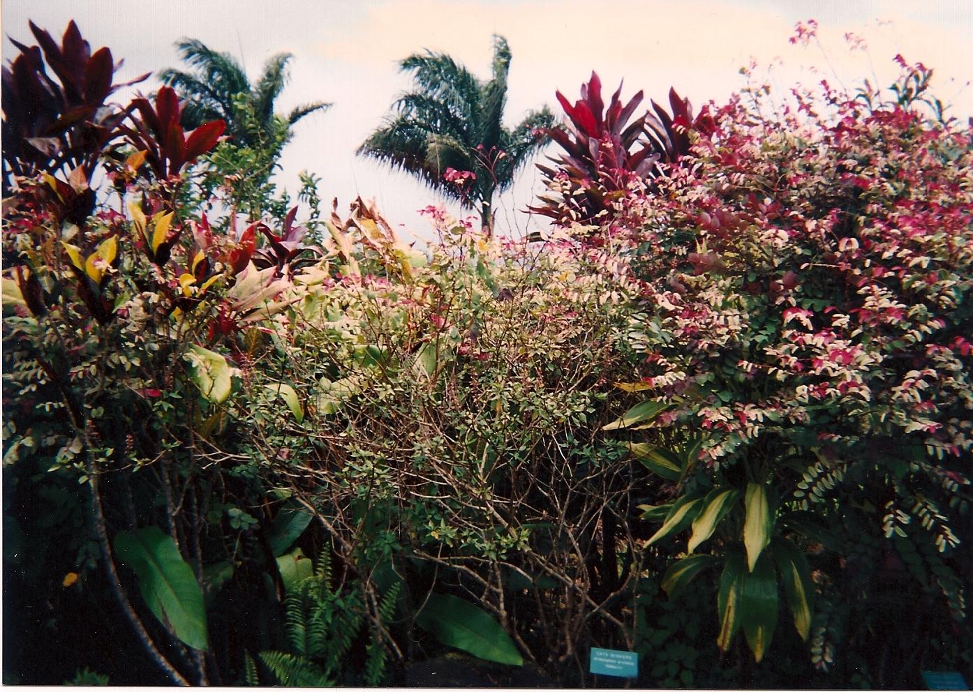Garden of eden beautiful photographs for Jardin of eden