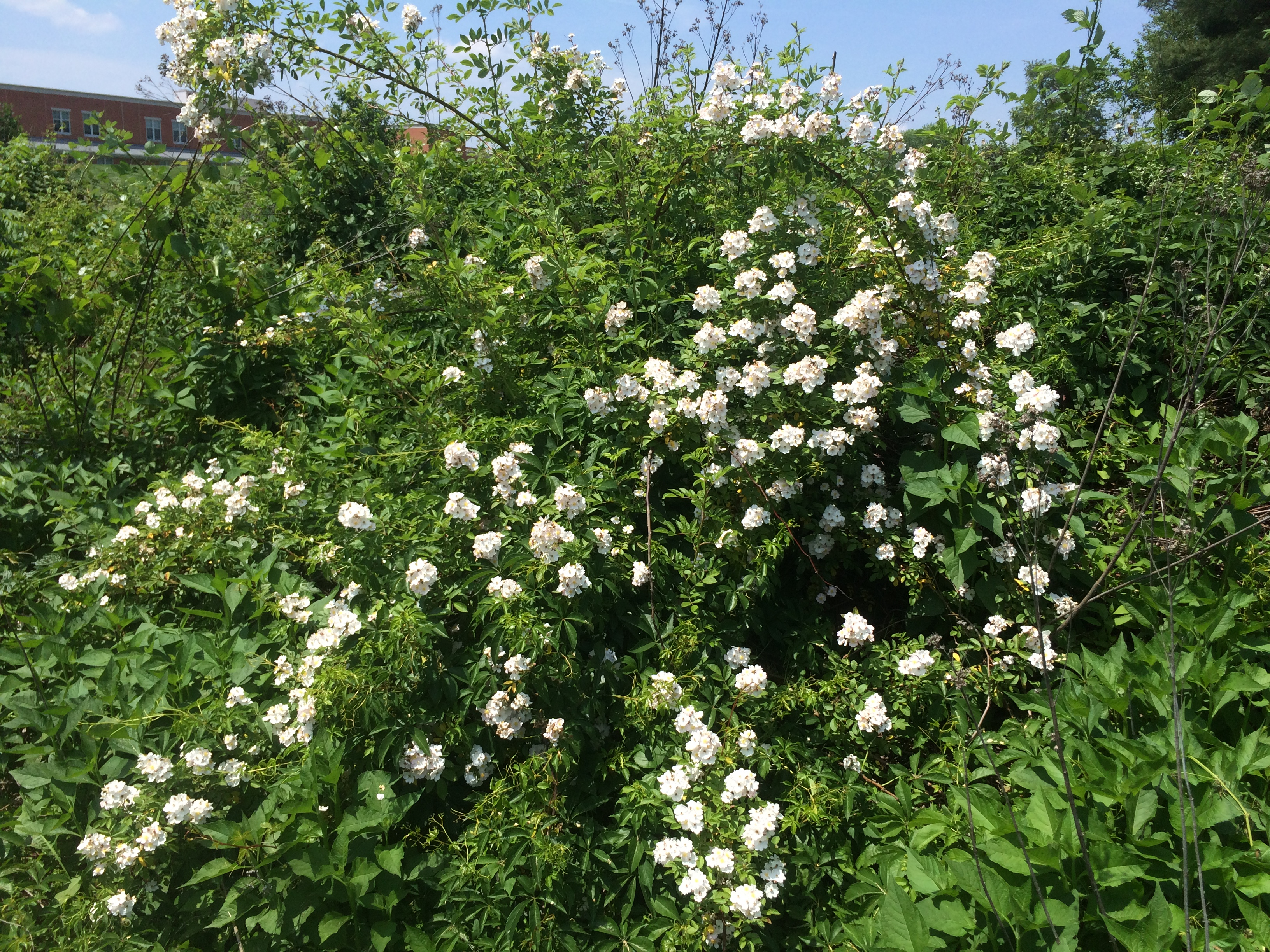 blossoms (2)