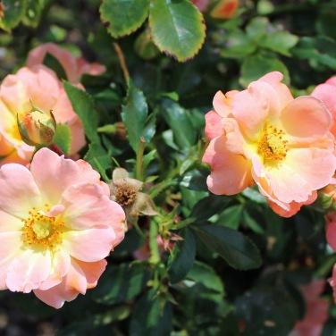 Blossom 12