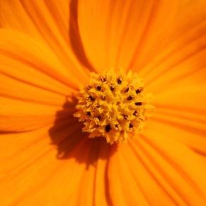 Blossom 13