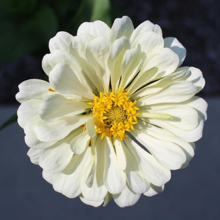 Blossom 14a