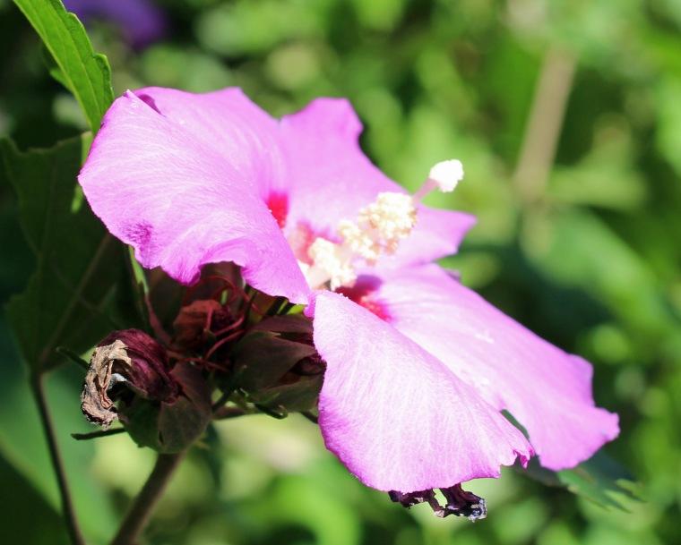 Blossom 2'