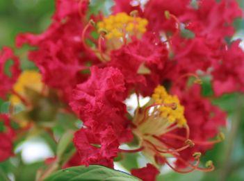 Blossom 6