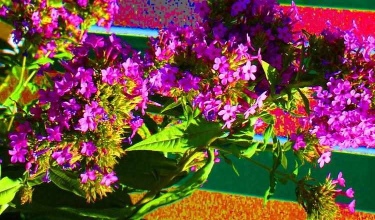 Blossoms 1_edited-1