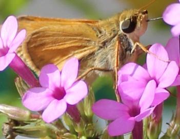 Butterfly 19