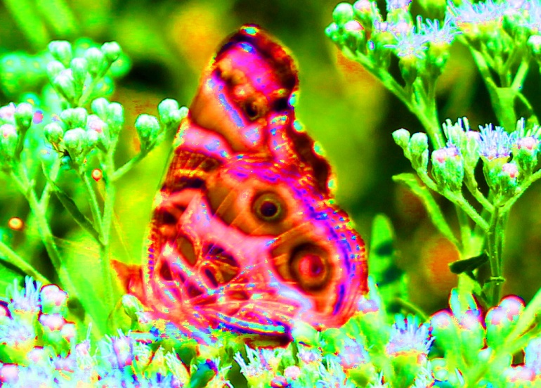 Butterfly saturate