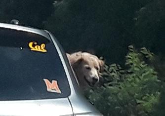 Dog in car 3_edited-1