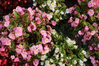 Garden 17