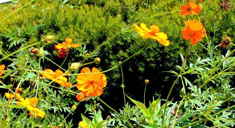 Garden 59_edited-1