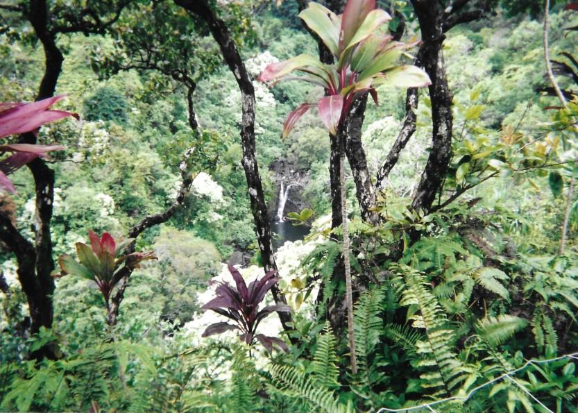 Maui 7