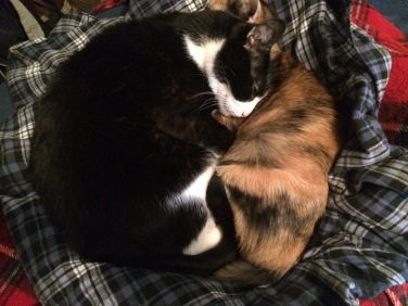 Max and Natasha Cuddle
