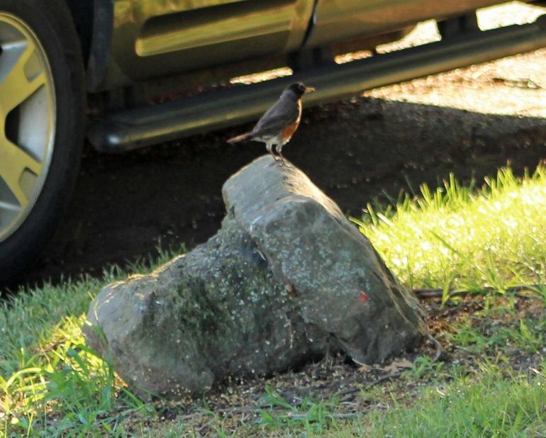 Robin rock