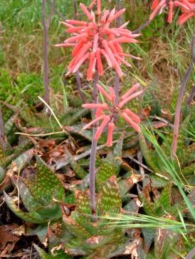 wild flowers 5