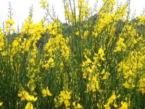 wild flowers 6