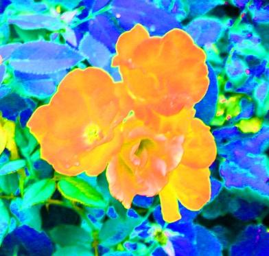 Blossoms hue