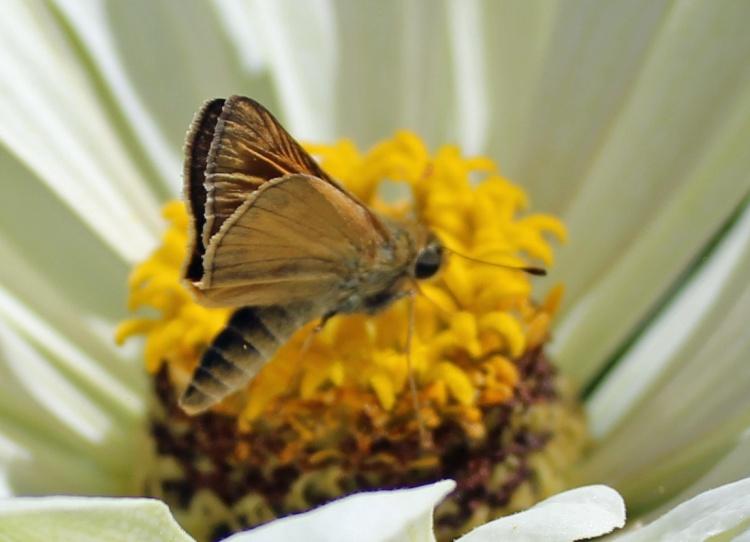 Butterfly 10
