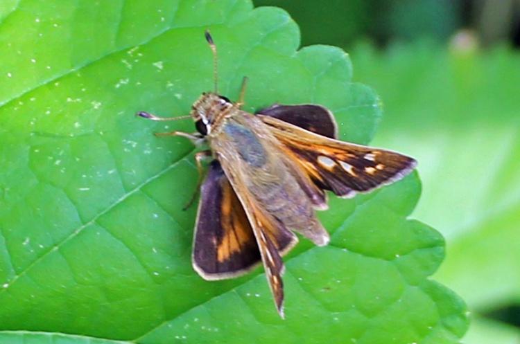 Butterfly 91