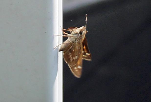 Butterfly 92