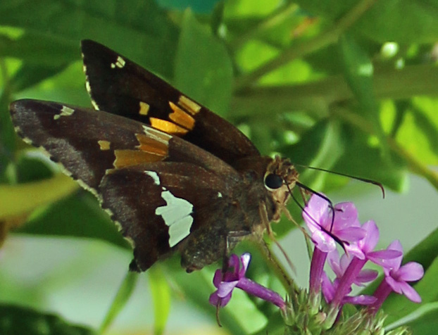 Butterfly 95