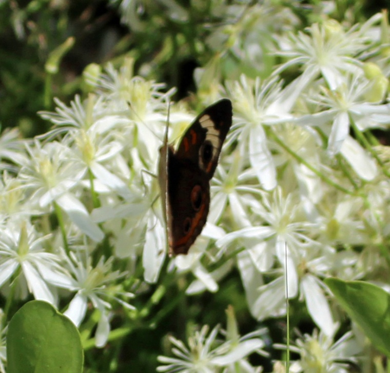Butterfly cool
