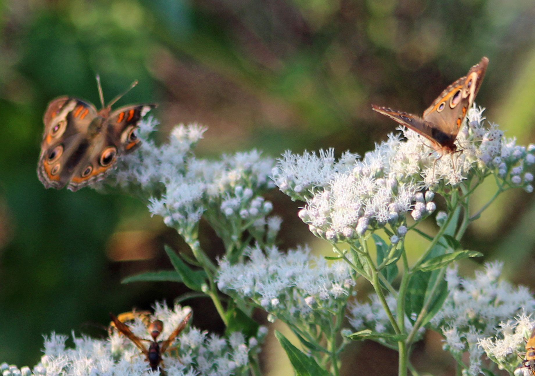 Butterfly jamboree 3