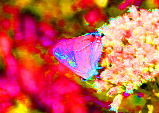 Butterfly psych 2