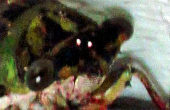 Cicada 1