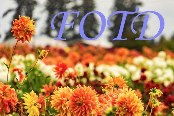 fotd-banner