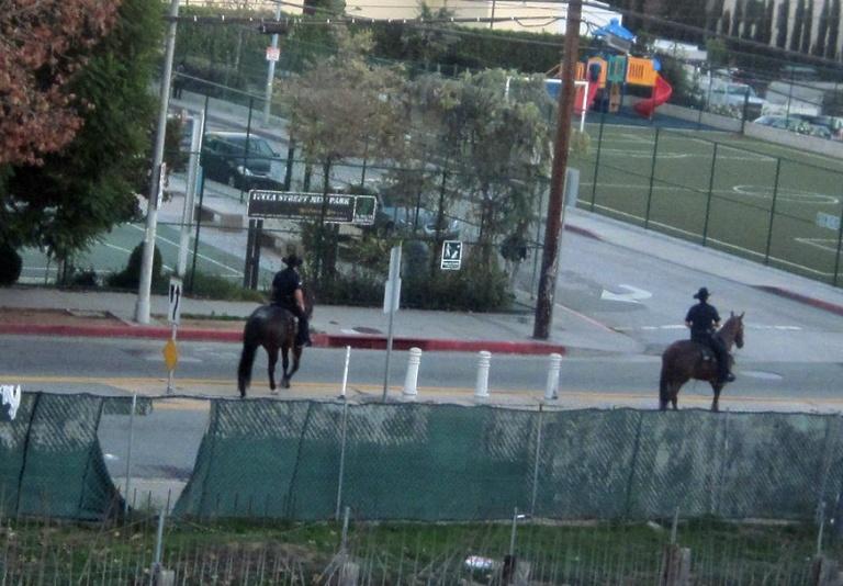 Horse cops crop