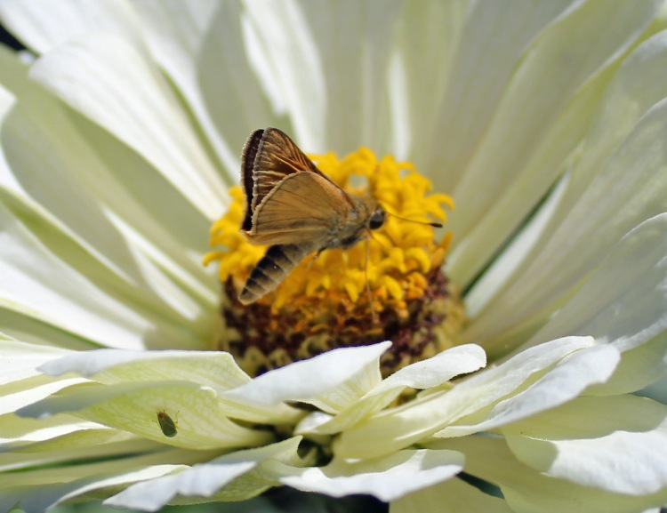 Blossom & Butterfly 1