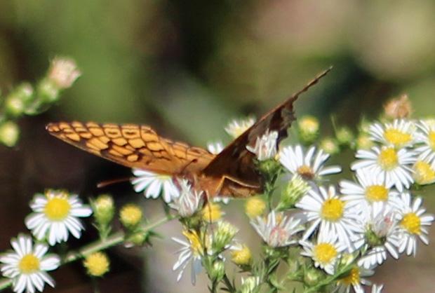 Butterfly 5 Nice