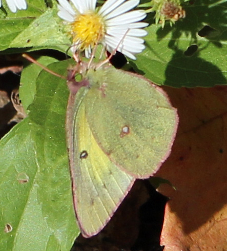 Butterfly brilliant 1.jpg