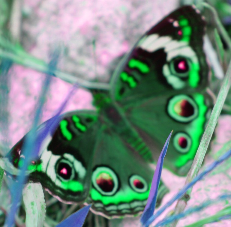 Butterfly psychedelic 1