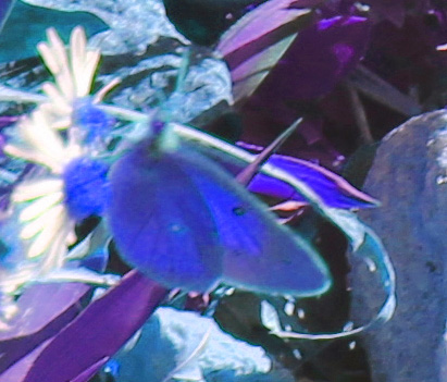 Butterfly psychedelic
