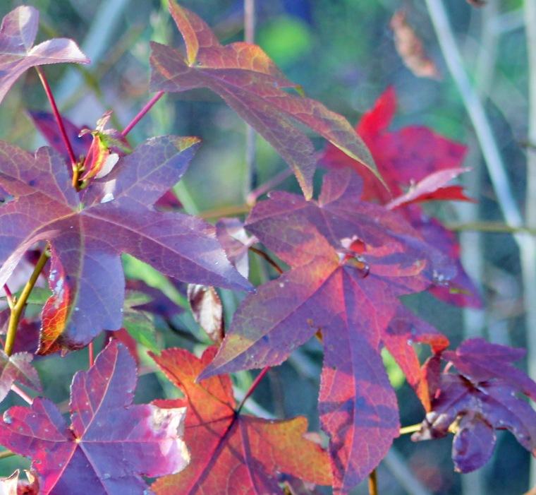FOTD 2 autumn leaves.jpg