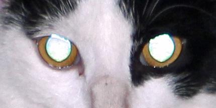 GarGar is watching