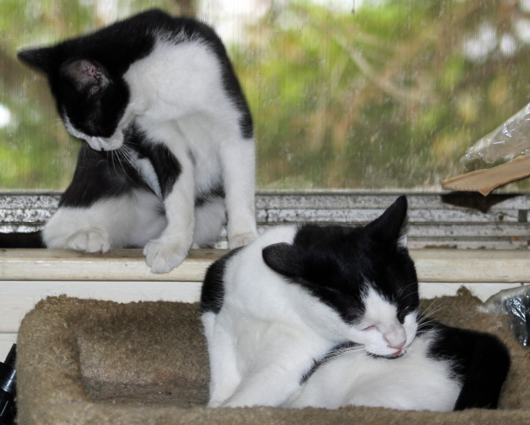 Kittens bathtime