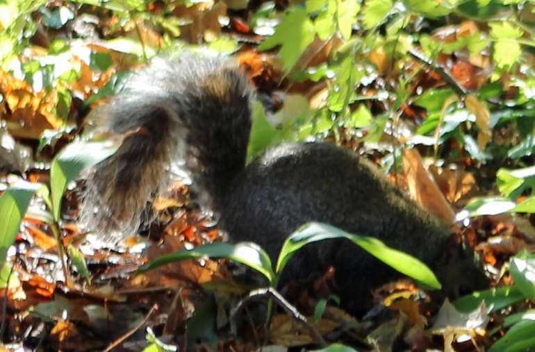 Squirrel 2 brilliant