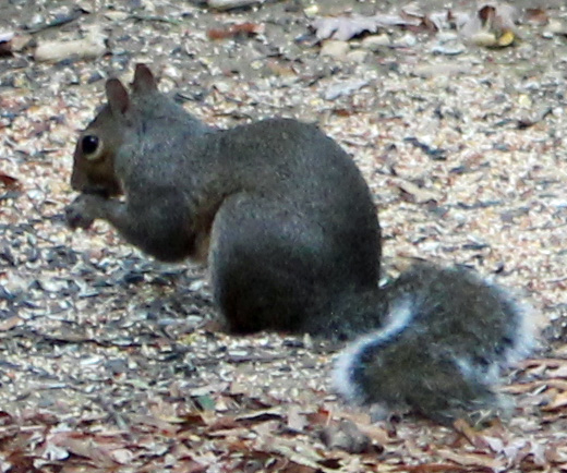 Squirrel 3 -nice!