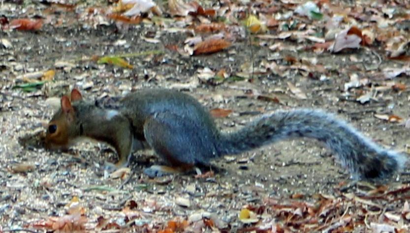 Squirrel 3