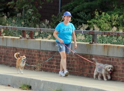 Street 2 - Walking the dogs
