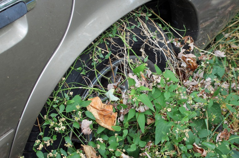 Tire with vines