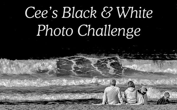 black-white-banner.jpg
