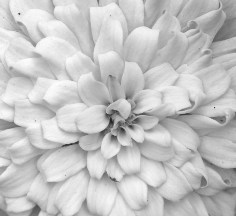 Blossoms 19 bw