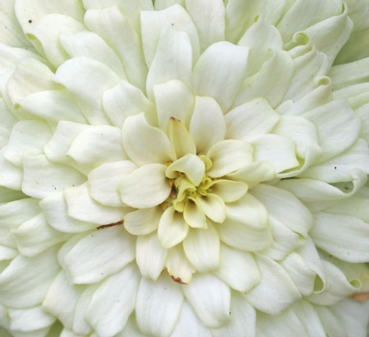 Blossoms 19