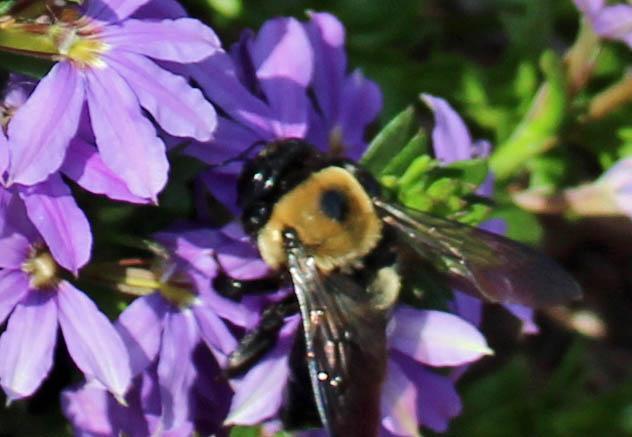 FOTD & bee 2