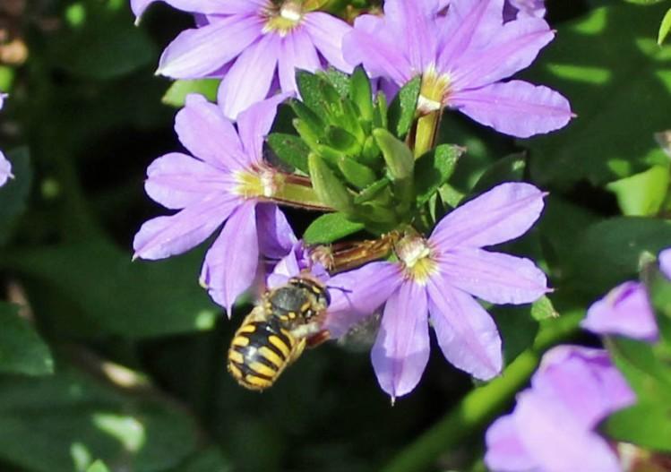 FOTD & Bee