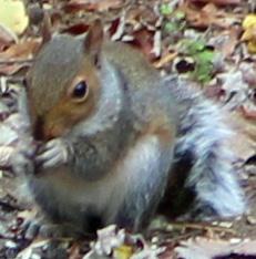 Squirrel 17