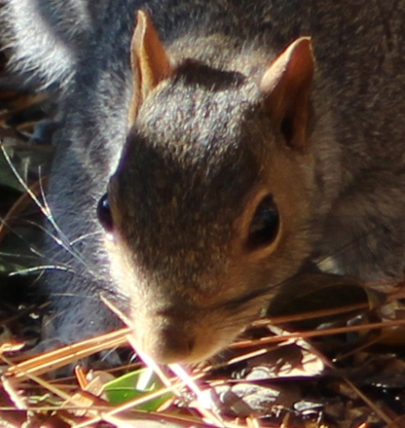 Squirrel 3b