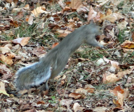 Squirrel Super!